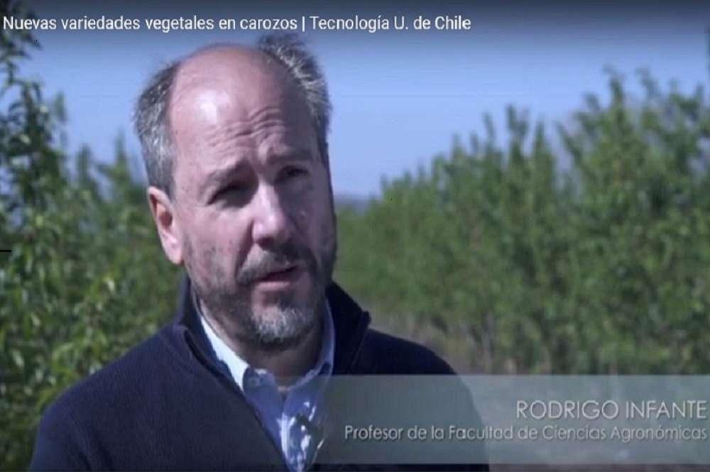 Nuevas Variedades de Nectarino, desarrolladas por la Universidad de Chile