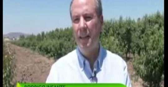 Entrevista al Profesor Rodrigo Infante en el programa Agenda Agrícola del canal CNN Chile
