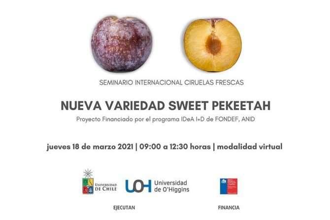 Seminario Internacional Ciruelas Frescas – Nueva variedad «Sweet Pekeetah»